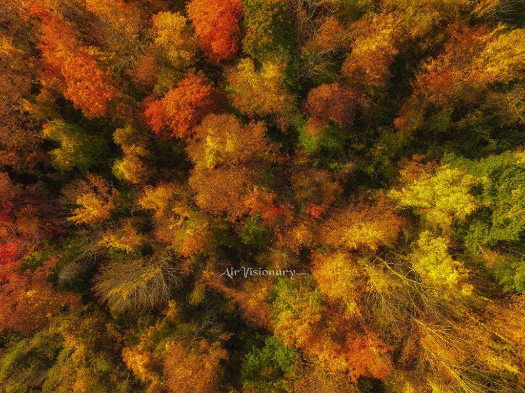 autumn-forest-overhead